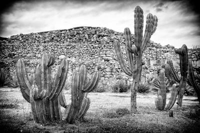 ¡Viva Mexico! B&W Collection - Mexican Cactus