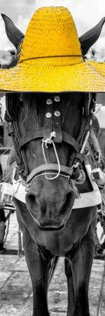 ¡Viva Mexico! Panoramic Collection - Horse with a Yellow straw Hat