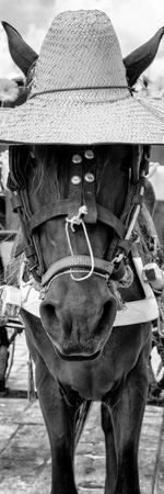 ¡Viva Mexico! Panoramic Collection - Horse with a straw Hat