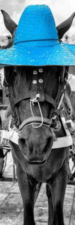 ¡Viva Mexico! Panoramic Collection - Horse with a Blue straw Hat
