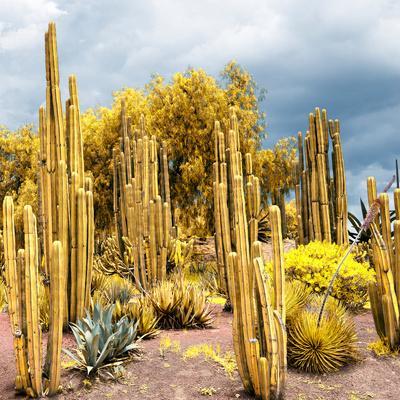 ¡Viva Mexico! Square Collection - Yellow Cardon Cactus