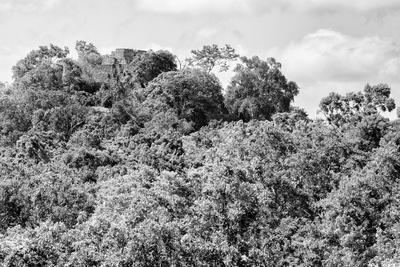 ¡Viva Mexico! B&W Collection - Ancient Maya City within the jungle - Calakmul