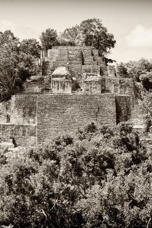 ¡Viva Mexico! B&W Collection - Pyramid in Mayan City of Calakmul V