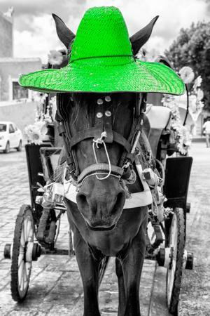 ¡Viva Mexico! B&W Collection - Horse with Green straw Hat
