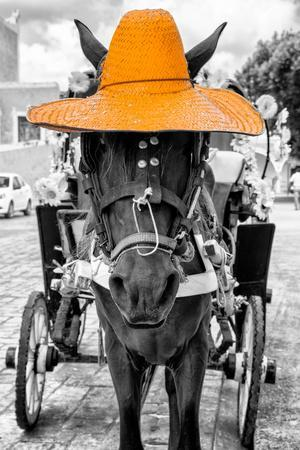 ¡Viva Mexico! B&W Collection - Horse with Light Orange straw Hat