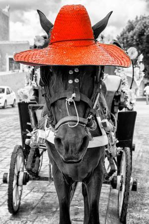 ¡Viva Mexico! B&W Collection - Horse with Red straw Hat