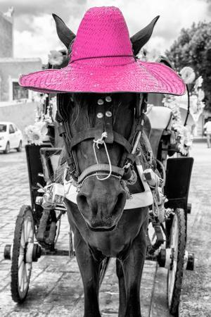¡Viva Mexico! B&W Collection - Horse with Pink straw Hat