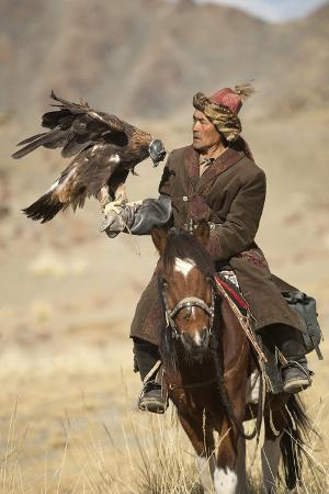 Eagle Hunter Mounted On Mongolian Horse With Female Golden Eagle (Aquila Chrysaetos)