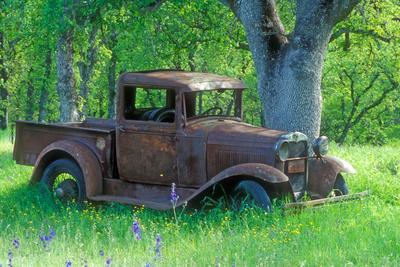 A Rusting 1931 Ford Pickup Truck Sitting in a Field under an Oak Tree