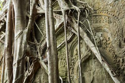 Tree Roots Growing over Bas-Relief on Ta Prohm Temple Ruins, Siem Reap