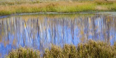 Utah, Dixie National Forest. Chriss Lake Landscape