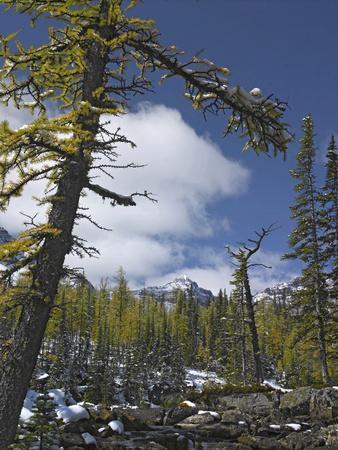 Opabin Plateau, Yoho National Park, British Columbia, Canada