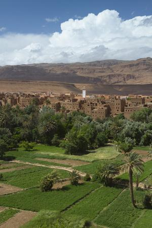 Africa, Morocco, Tinerhir. the Lush Oasis Outside of Tinerhir, in Todra Gorge