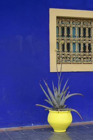 Africa, Morocco, Marrakesh. Cactus in a Bright Yellow Pot Against a Vivid Majorelle Blue Wall