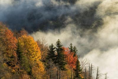 Autumn Colors and Mist at Sunrise, North Carolina