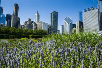 Colorful Flowers in the Millennium Park with the Skyline of Chicago, Illinois, Usa