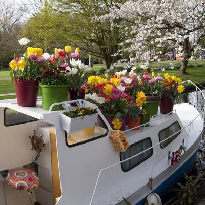 Boat Decorated with Potted Spring Blooms