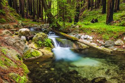 Hare Creek and Redwoods, Limekiln State Park, Big Sur, California, Usa