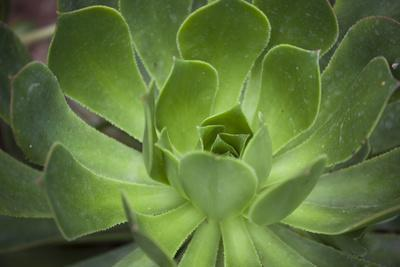 Africa, Morocco, Marrakesh. Close-Up of a Cactus in a Botanical Garden