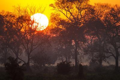 Brazil, Mato Grosso, the Pantanal, Pouso Alegre. Sunset Through Ipe Trees