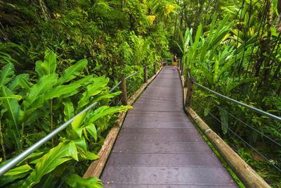 Trail at the Hawaii Tropical Botanical Garden, Hamakua Coast, the Big Island, Hawaii, Usa