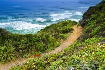The Trail to Sand Dollar Beach, Los Padres National Forest, Big Sur, California, Usa