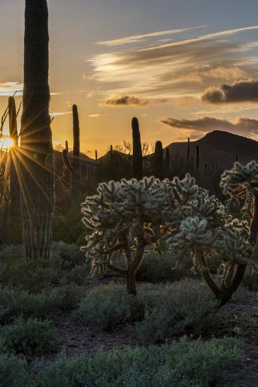 Arizona  Sunset over Desert Habitat, Organ Pipe Cactus National Monument