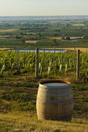 Washington State, Walla Walla. Vineyard Overlooking the Valley