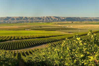 Washington State, Royal Slope. Vineyard in Washington's Columbia Valley