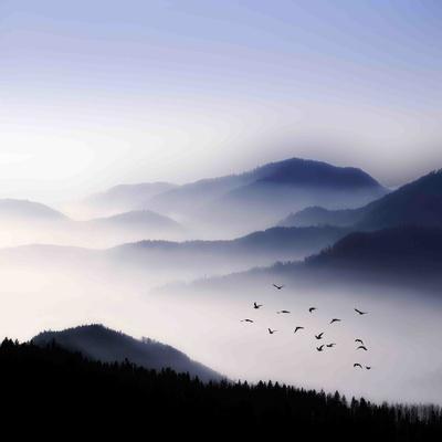 Flying over the Fog