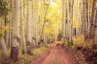 Autumn Foliage and Path in Aspen, Snowmass, Colorado