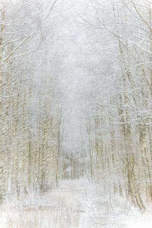 Path Through Winter Forest Gunnebo Kulturreservat, Mölndal, Sweden, Europe