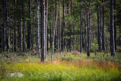Moorlands, Raised Bog, Gnosjö