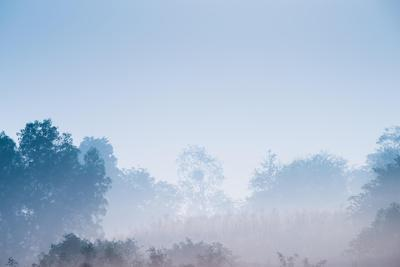 Forest in the Morning Mist