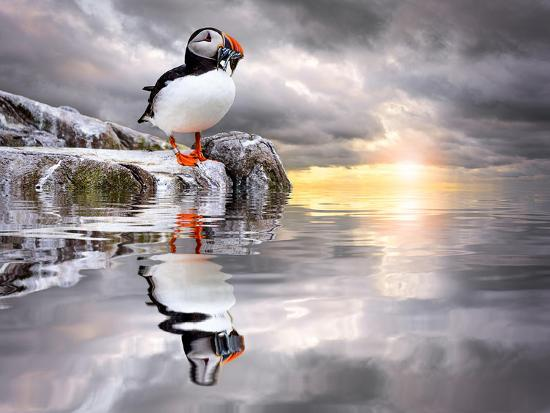 The Wonderfully Funny Puffin with a Calm Reflecting Landscape