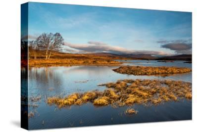 Early Morning Light at Rannoch Moor, Scotland UK