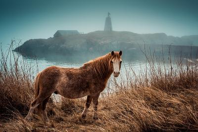 Wild Pony on Llanndwyn Island, Wales, UK