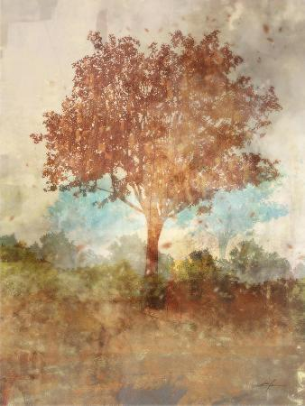 Sun Dappled Tree