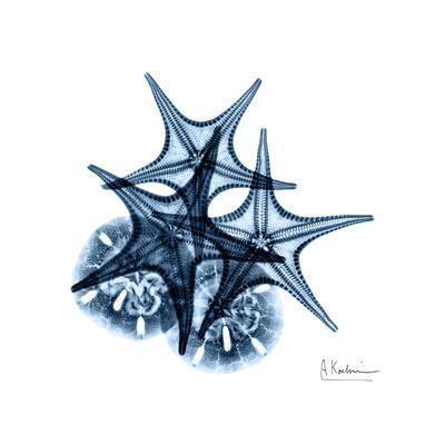Blue Starfish 2