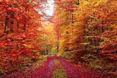 Magnificent Autumn Colors Forest in October
