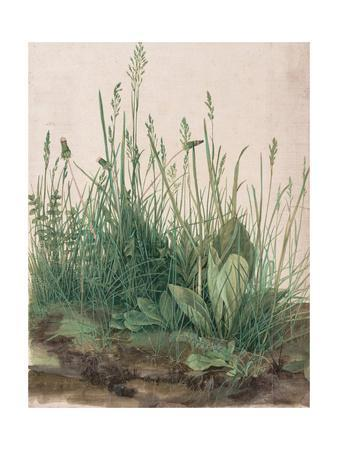The Large Piece of Turf, 1503