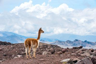 Andes of Central Ecuador