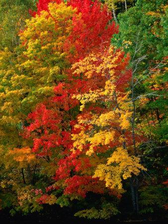Autumn Colours in Marquette County, USA
