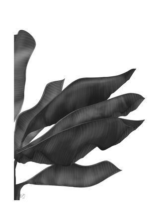 Banana Leaves 1, Black on White