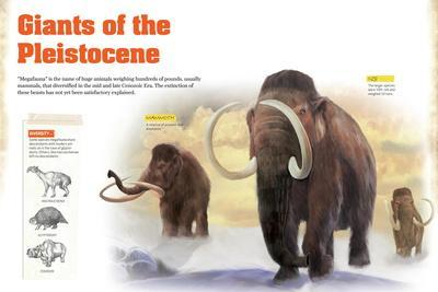 Infographic About the Megafauna That Appeared During the Pleistocene Period of the Cenozoic Era