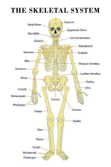 full body joint diagram hip joint diagram of human