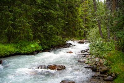 Banff Glacial River Photo Print Poster