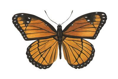 Viceroy Butterfly (Basilarchia Archippus), Insects