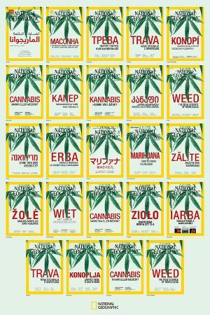 Weed around the World