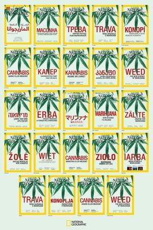 Weed around the World